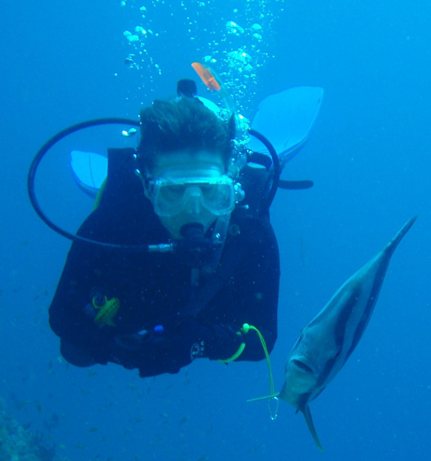 Mhairi Gordon-Preston diving with batfish